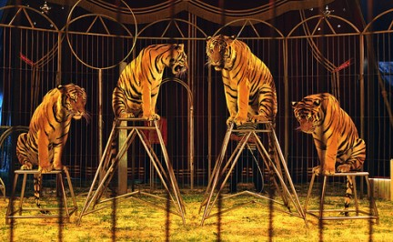 El circo con animales