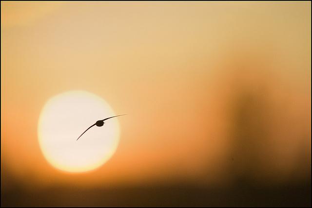 Fantástica fotografía obra realizada por Julen Landa. Creative common Attribution-NonCommercial-NoDerivs 2.0 Generic