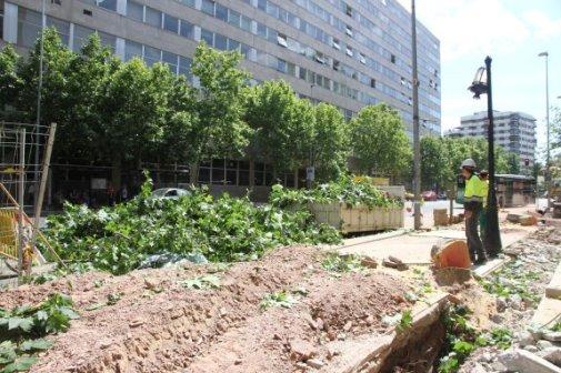 Tala de arboles en la calle primo de rivera (hoy.es)