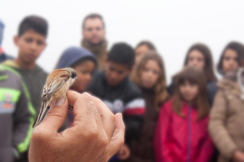 Anillamiento de aves